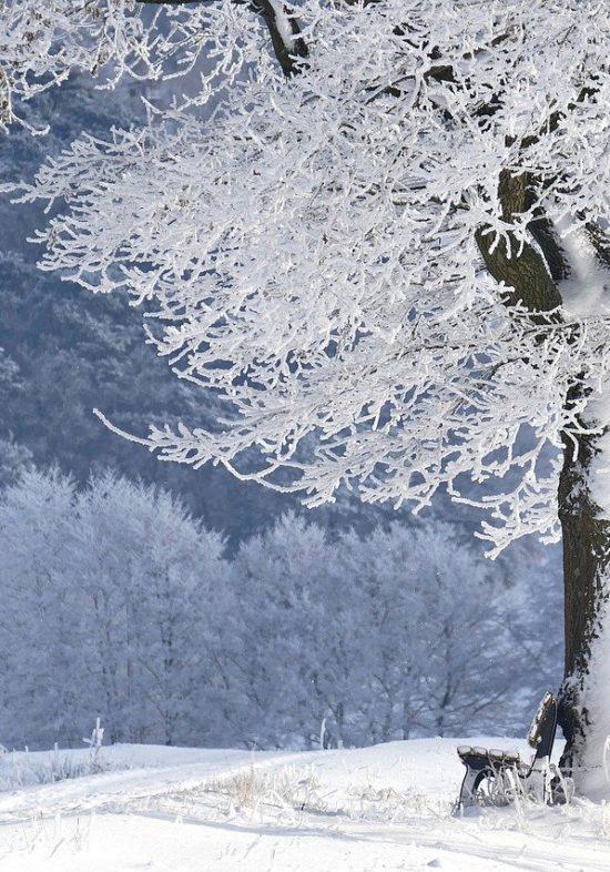 winter-g8fdda21c5_1280